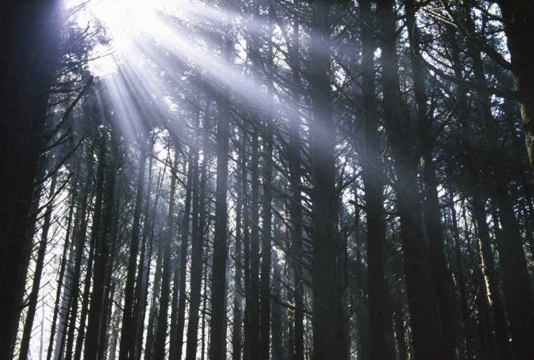 warning-forestry-loss_35